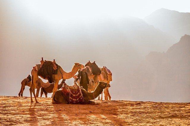 Giordania cammelliere